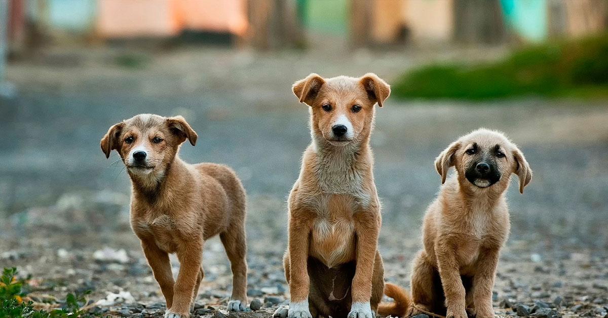 II.7. Ефективна грижа за бездомните животни