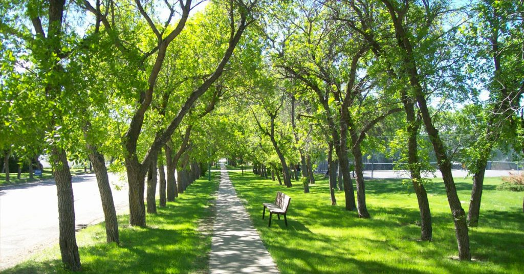 Зелените пояси около булевардите филтрират шума и праховото замърсяване